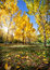Stock Image : Autumn in the park