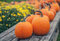 Stock Image : Autumn Pumpkins