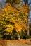 Stock Image : Autumn tree
