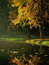 Stock Image : Autumn trees