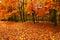 Stock Image : Autumn trees in park