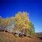 Stock Image : Autumn trees under blue sky