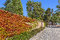 Stock Image : Autumnal ivy on brick wall.