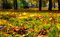 Stock Image : Autumnal leaves in the park