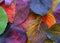 Stock Image : Background from foliage