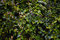 Stock Image : Background with green branches of a bush