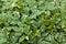 Stock Image : Background, texture foliage