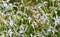 Stock Image : Background of white flowers