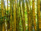 Stock Image : Bamboo Forest