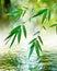 Stock Image : Bamboo leaf ( spirit of zen)