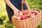 Stock Image : Basket with apples