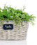 Stock Image : Basket with herbs