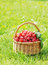 Stock Image : Basket with ripe raspberry on green grass
