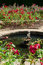 Stock Image : Batemans Rose Garden
