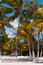 Stock Image : Beach beds under palm trees on Caribbean