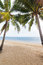 Stock Image : Beach coconut palm trees