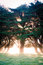 Stock Image : Beaming tree