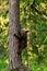 Stock Image : Bear cub climbing