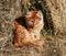 Stock Image : Beautiful cat