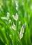 Stock Image : Beautiful  fleur-de-lis,  heraldic  lily