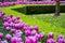 Stock Image : Beautiful flower background