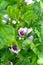 Stock Image : Beautiful flowers in  garden