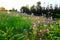 Stock Image : Beautiful flowers