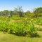 Stock Image : Beautiful garden