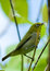 Stock Image : Beautiful Green bird