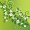 Stock Image : Beautiful jasmine flowers and green swirls