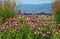 Stock Image : Beautiful pink echinacea garden