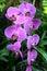 Stock Image : Beautiful purple orchid