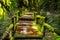 Stock Image : Beautiful rain forest at ang ka nature trail