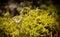 Stock Image : Beautiful Scarce Swallowtail butterfly