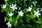 Stock Image : Beautiful small white flower