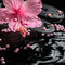 Stock Image : Beautiful spa setting of delicate pink hibiscus, zen stones