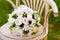 Stock Image : Beautiful wedding flowers