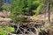 Stock Image : Beaver dam