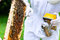 Stock Image : Beekeeper with smoker controlling beeyard and bees