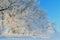 Stock Image :  Berijpte Bomen bij Zonsopgang