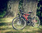 Stock Image : Bicycle in forest