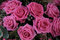 Stock Image : Big pink roses in a bridal bouquet