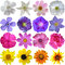 Stock Image : Big Selection of Various Flowers