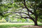 Stock Image : Big trees