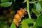 Stock Image : Big yellow caterpillar