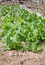 Stock Image : Bio salad