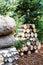 Stock Image : Birch logs and Christmas tree