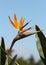 Stock Image : Bird of Paradise