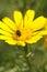 Stock Image : Black beetle spring flower
