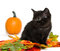 Stock Image : Black kitten and pumpkin